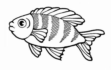 鱼的简笔画图片,鱼的简笔画图片大全