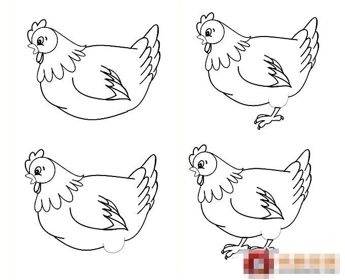 老母鸡简笔画步骤 老母鸡怎么画