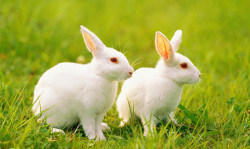 简单的小兔子怎么画 兔子简笔画图片大全 兔子简笔画步骤